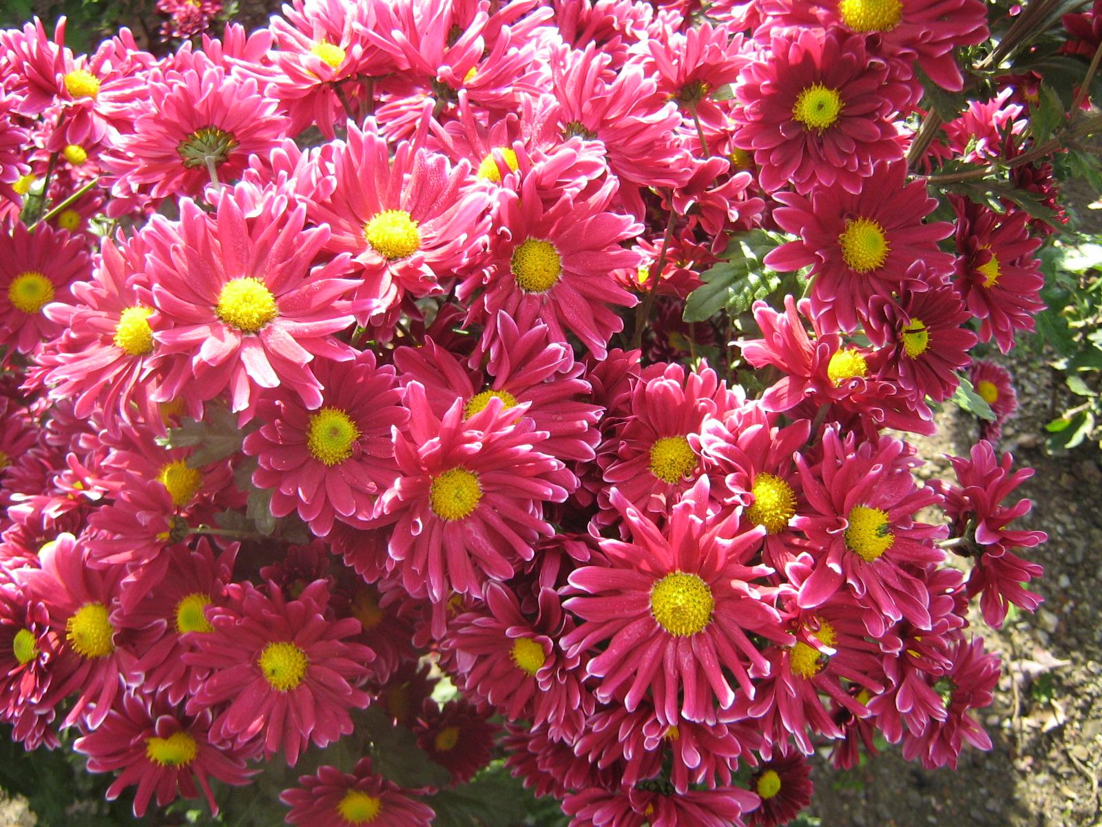 Цветочный гид