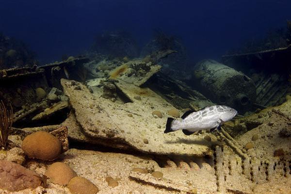 Дайвинг и подводный туризм