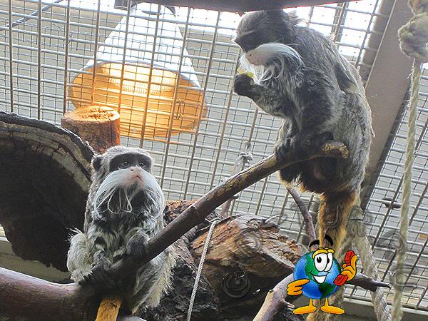 Зоопарк и ботанический сад Вильгельма в Штудгарте Германия